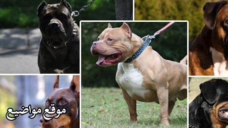 اسعار وانواع الكلاب فى مصر 2021 بالتفصيل