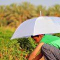 تفسير حلم رؤية الزراعة