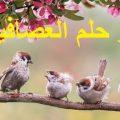 تفسير حلم رؤية العصافير