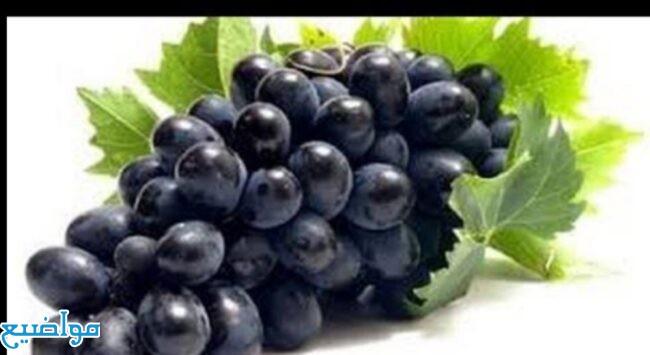تفسير حلم رؤية العنب الأسود في المنام