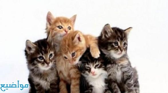 تفسير حلم رؤية القطط في المنام بالتفصيل