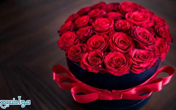 تفسير حلم رؤية الورد الاحمر في المنام