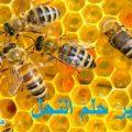تفسير رؤية حلم النحل