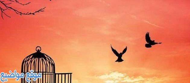 أقوال وحكم عن الحرية والكرامة قصيرة