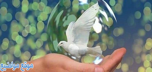 أقوال وحكم عن السلام العالمي قصيرة