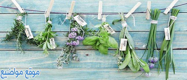 علاج البشرة الحساسة الدهنية والجافة بالأعشاب