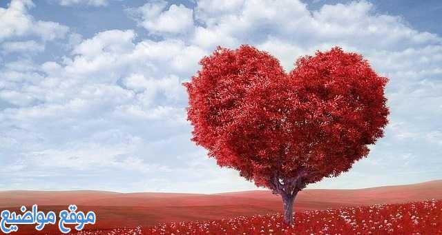 كلمات وعبارات حب وعشق قصيرة