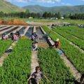 حكم وأقوال عن الزراعة وأشعار عن الزراعة