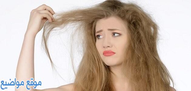 طرق وماسكات لعلاج هيشان الشعر وطريقة تحضيرها