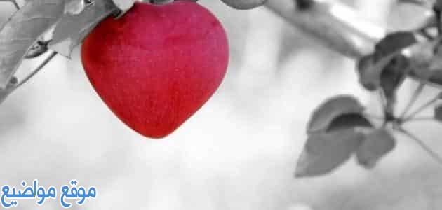 كلام جميل من القلب للحبيب قصير وطويل
