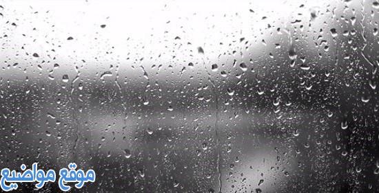 كلمات عن المطر والشتاء وعبارات عن المطر والغيم