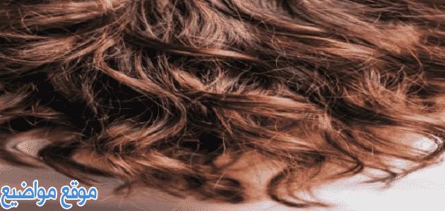 ماسك لعلاج الشعر التالف والجاف وطريقة التحضير