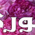 معنى اسم جوري وشخصيتها ومعنى اسم جوري في الاسلام والقران